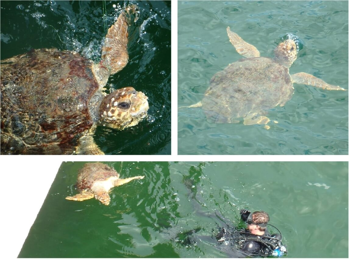turtle_collage